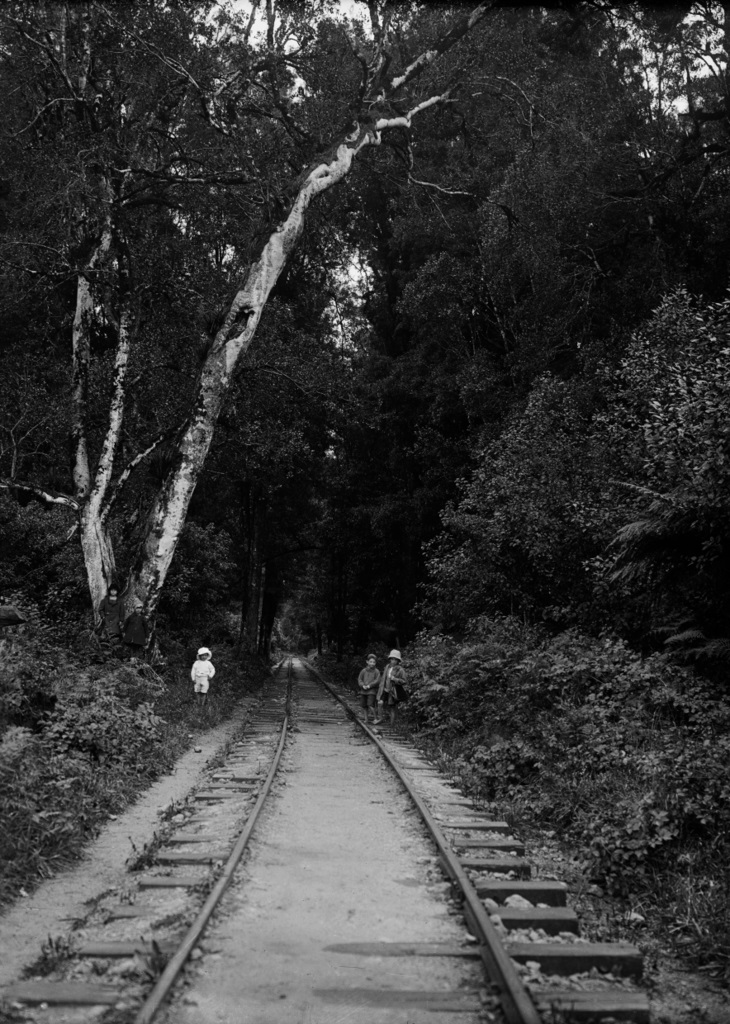 730px-Bush_tramline_in_the_Mamaku_bush._ATLIB_293648.jpg